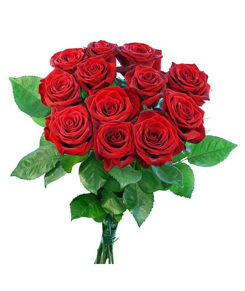 12 ורד אדום